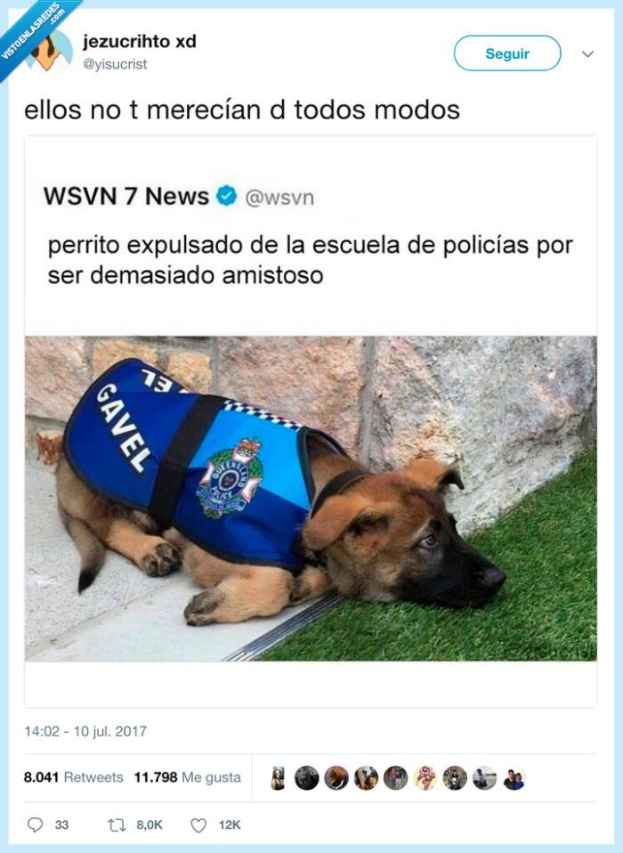 perro,policía