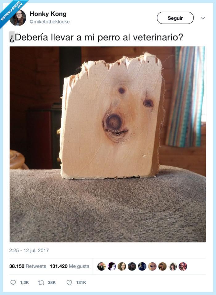 madera,perro,veterinario