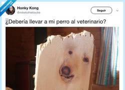Enlace a ¿Debería llevar a mi perro al veterinario?