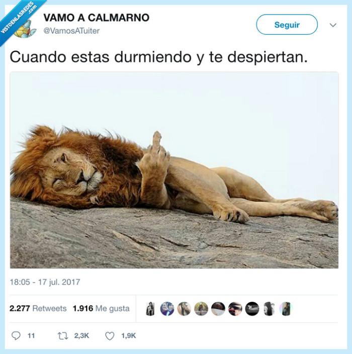 leon,peineta