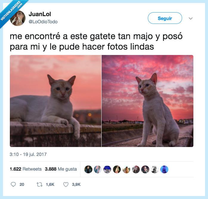 chulas,fotos,gato,posar