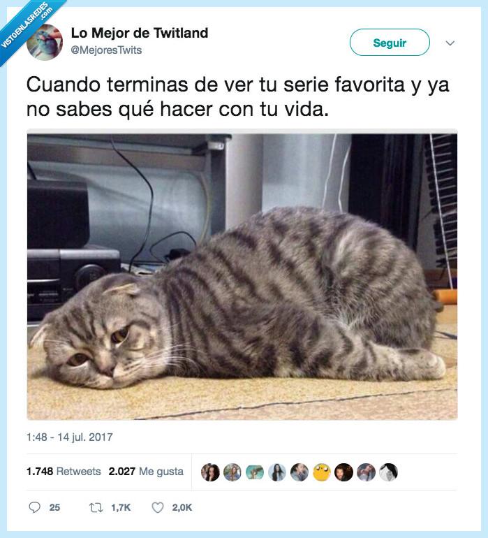 gato,sentido,serie