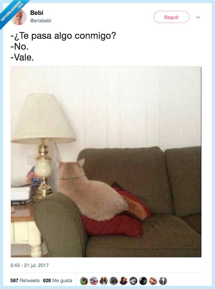 gato,nada,pasar