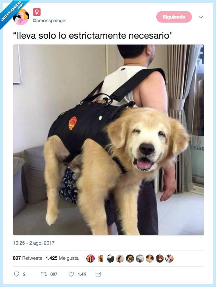 felicidad,llevar,mono,perro