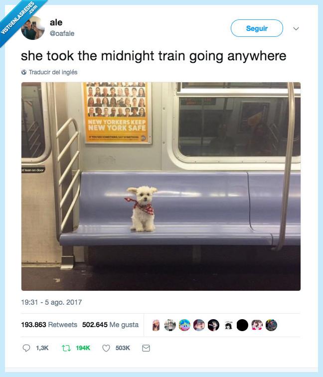 canción,journey,perrete