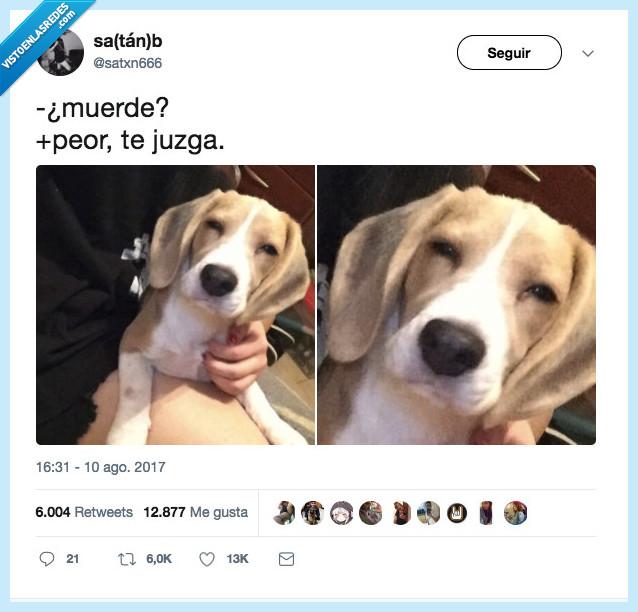 juzgar,morder,perro