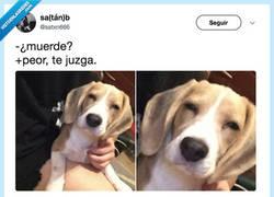 Enlace a El perro acusador, por @satxn666
