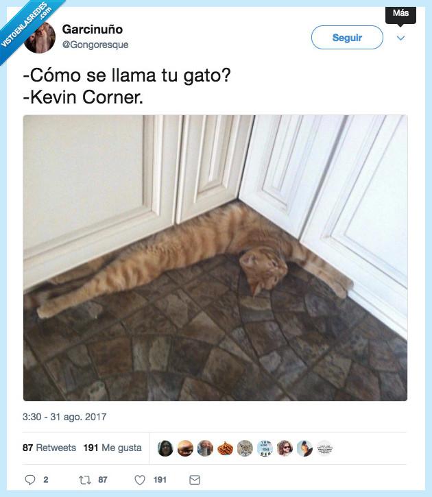 chistaco malo,esquina,gato