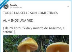 Enlace a TODAS LAS SETAS SON COMESTIBLES, por @Cacharrero_M