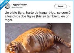 Enlace a 1 triste tigre muere de indigestión, por @Marifelaccion