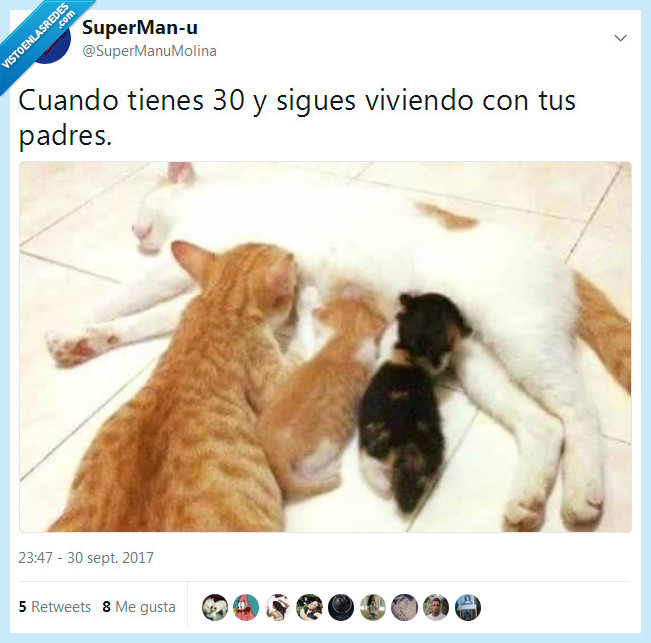años,gatos,independizarse,padres,vivir