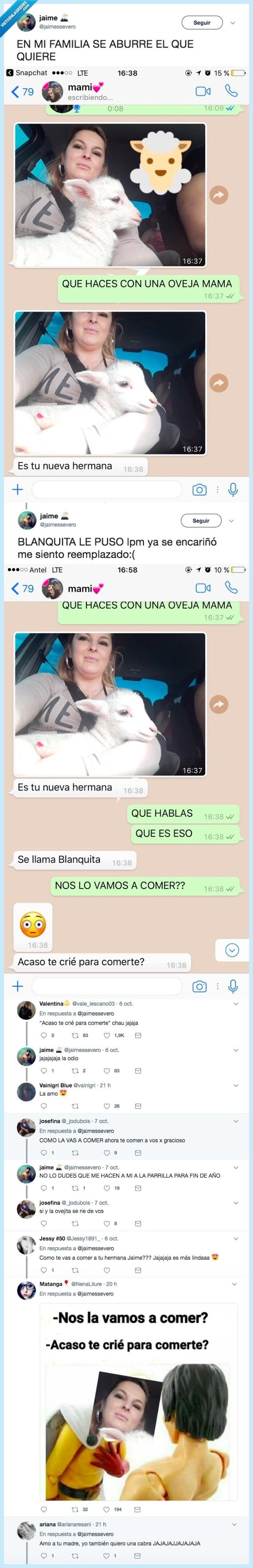 madre,oveja