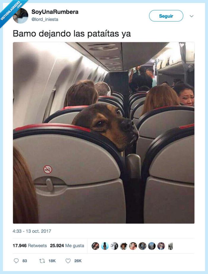 dejar,patadas,perro