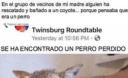 Enlace a Los vecinos de esta comunidad son un poco lerdos y menten en su casa a un coyote muy peligroso