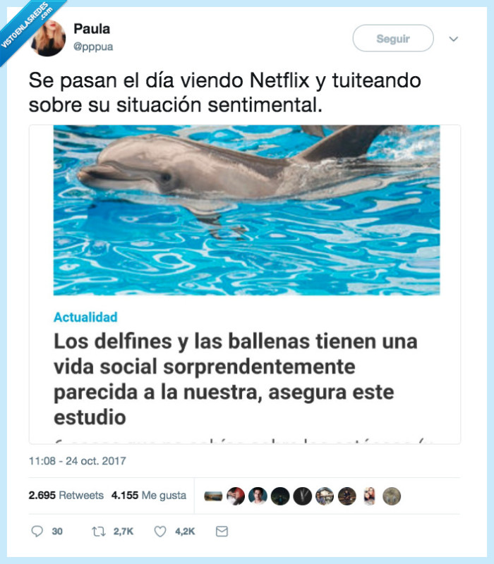 delfín,interesante,vida social