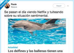 Enlace a Fijo que los delfines tienen una vida más interesante que la mía, por @pppua
