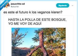 Enlace a La culpa de la desforestación la tienen los veganos, por @yisucrist