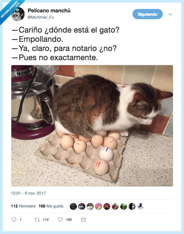 complejo,gallina,gato