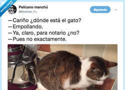 Enlace a El gato tiene complejo de gallina, por @Mortimer_Fu