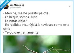 Enlace a Insectos palo, por @losmeconios