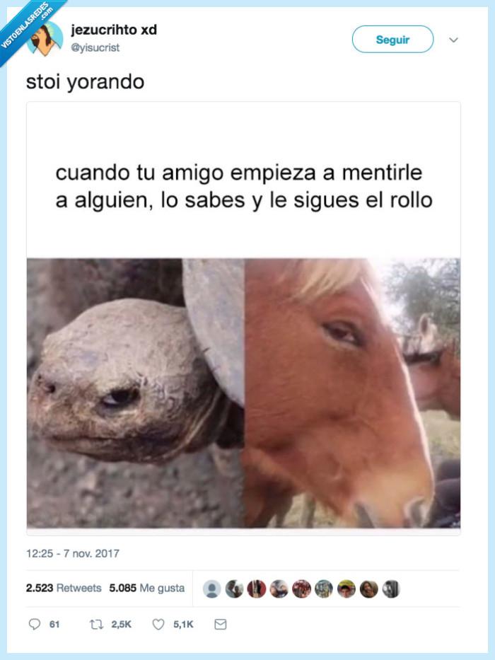 amigo,caballo,mentir,tortuga