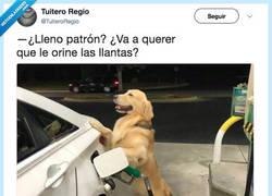 Enlace a Trabaja en la Guausolinera, por @TuiteroRegio