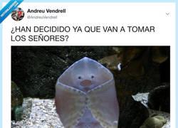Enlace a La mantarraya más majestuosa del océano, por @AndreuVendrell