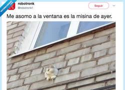 Enlace a Nacha Miau, por @robotronk1