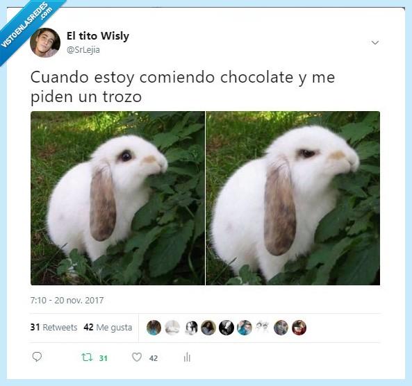 chocolate,conejo,enfadado,srlejia,trozo,twitter,wisly
