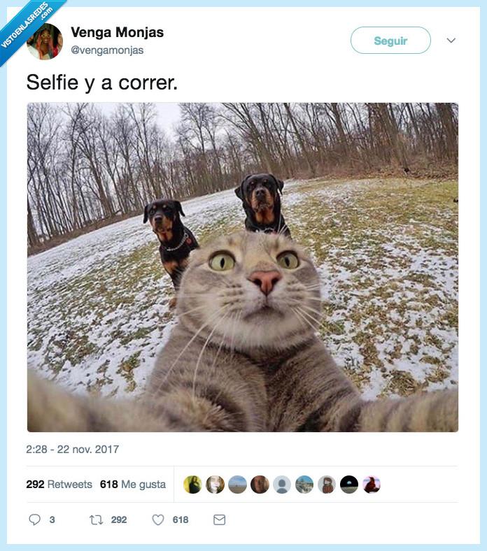 correr,gato,salir