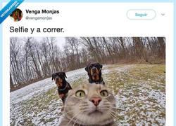 Enlace a Este gato los tiene bien puestos, por @vengamonjas