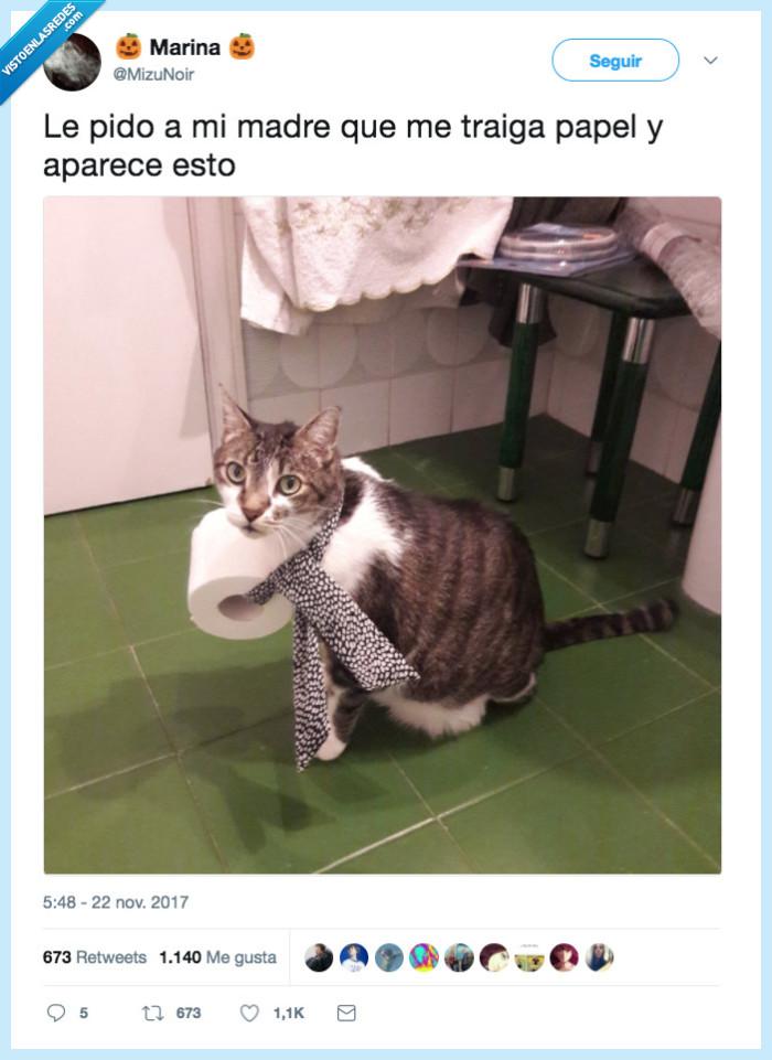 gato,madre,papel