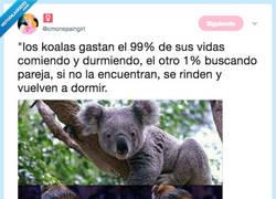 Enlace a En todas mis otras vidas fui Koala, por @cmonspaingirl
