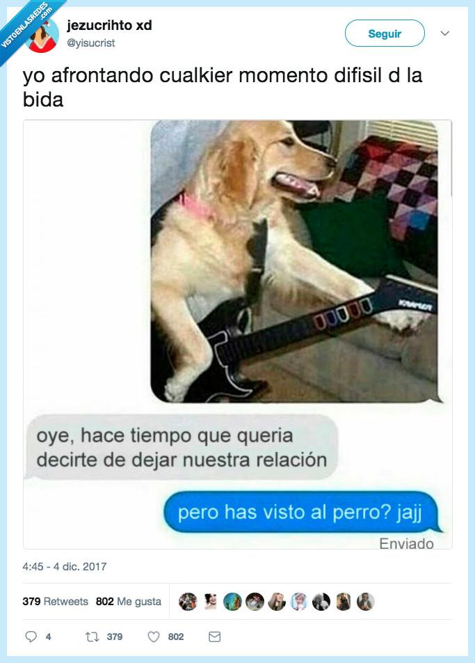 decisiones,perro,vida