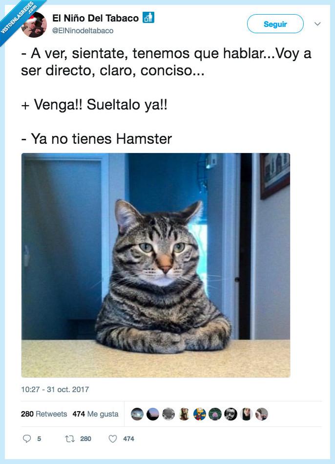 gato,hablar,sentar