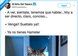 Enlace a Cuando el gato tiene que decirte algo serio, por @ElNinodeltabaco