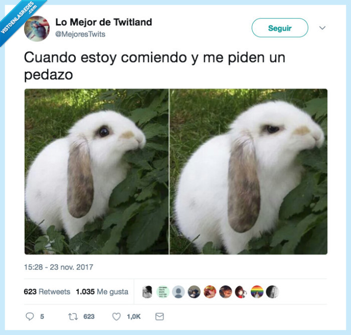 comida,conejo,tocar