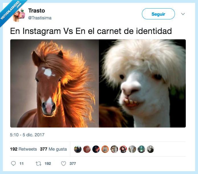 caballo,filtros,instagram,llama