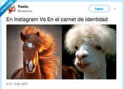 Enlace a Con filtros // Sin filtros, por @Trastisima