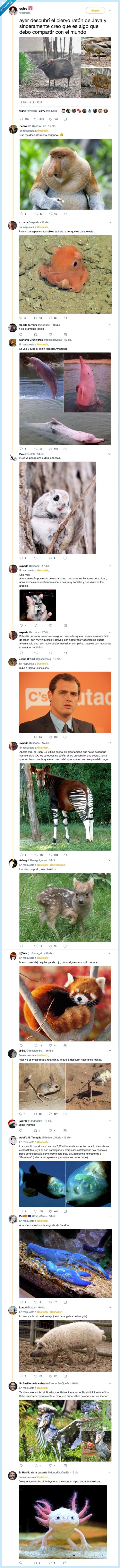animales,raros