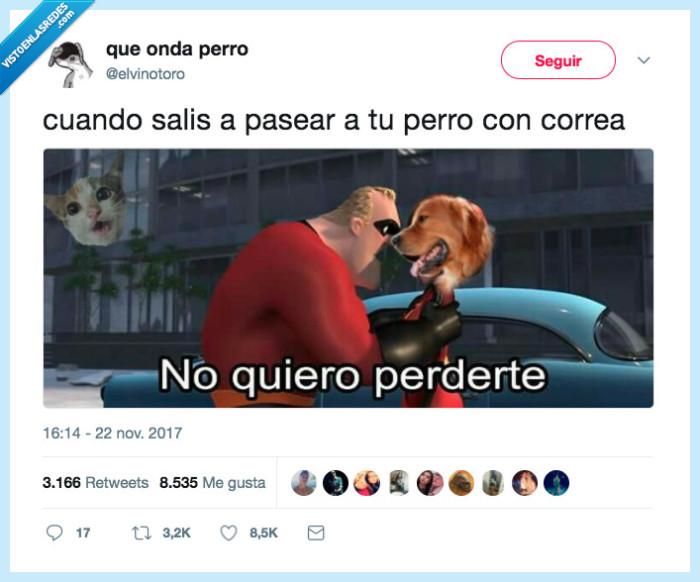 pasear,perro,perro correa