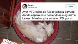 Enlace a La emotiva carta de despedida de la dueña de esta perra que nos ha roto el corazón, por @duende_lew