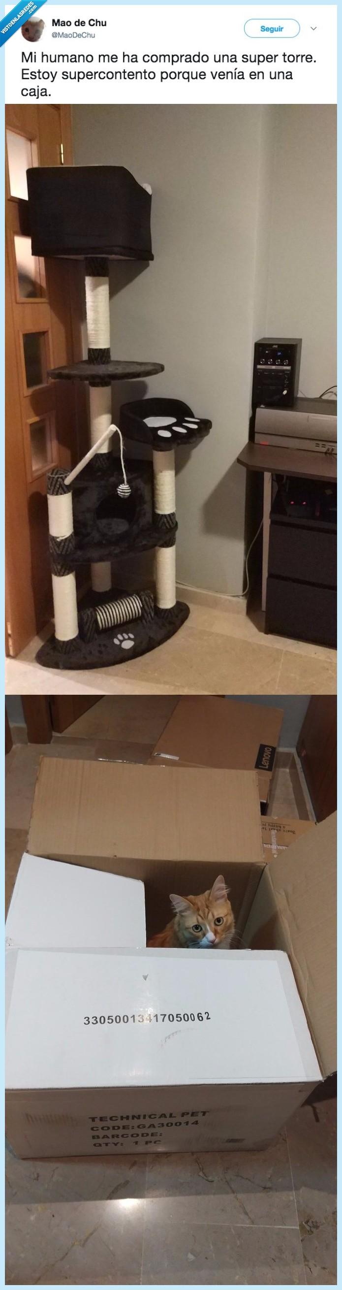 caja,gatos,tener