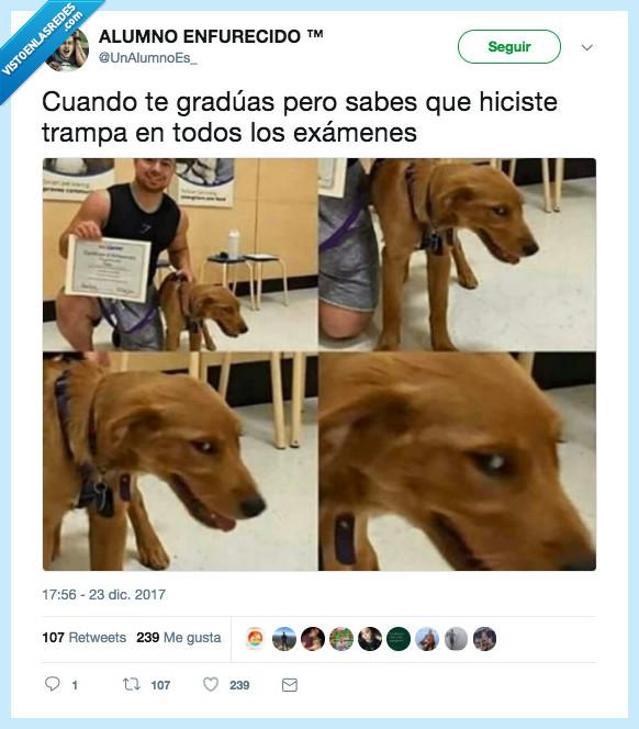 examen,nota,perro