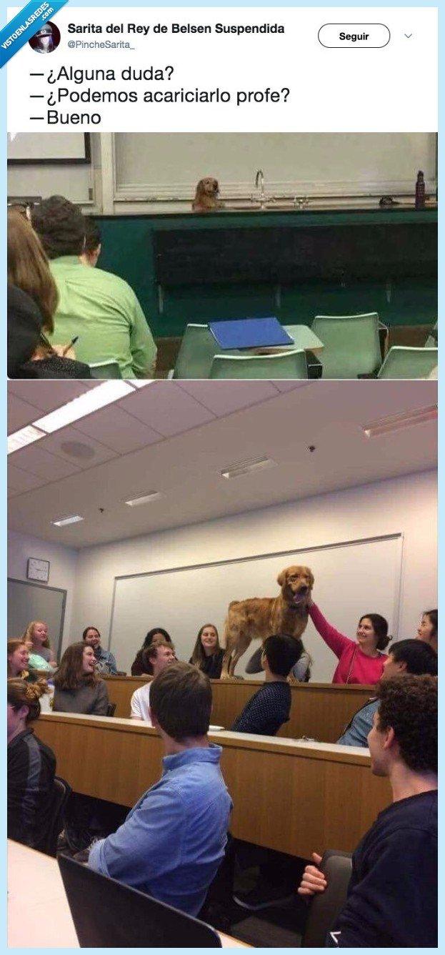 acariciar,clase,perro