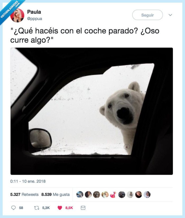 meme,oso