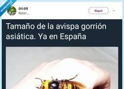 Enlace a Hasta siempre España, por @g0gh__