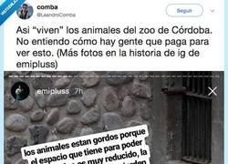 Enlace a ¿Se deberían prohibir los zoos? Viendo esto está claro que sí, por @LeandroComba