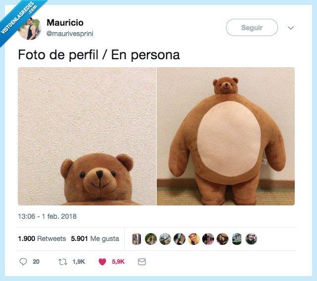 oso,peluche,perfil,persona