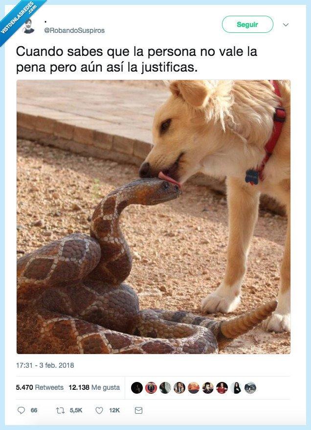 merecer la pena,perro,serpiente